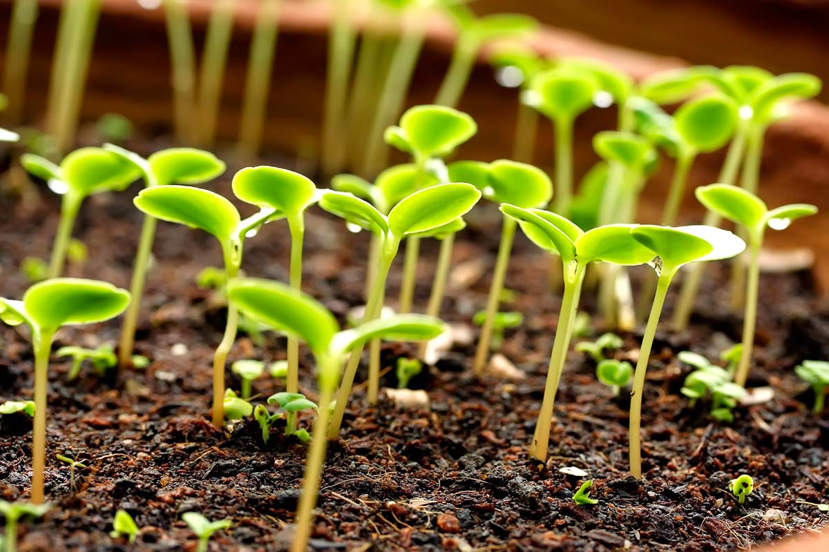 Купить ростки растений