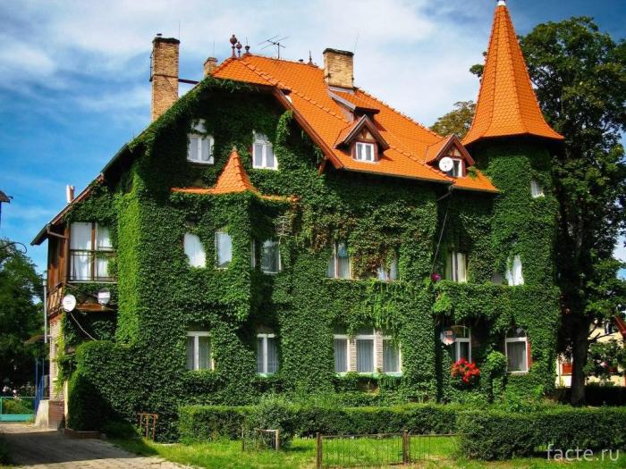Растения-улучшают-микроклимат-в-здании