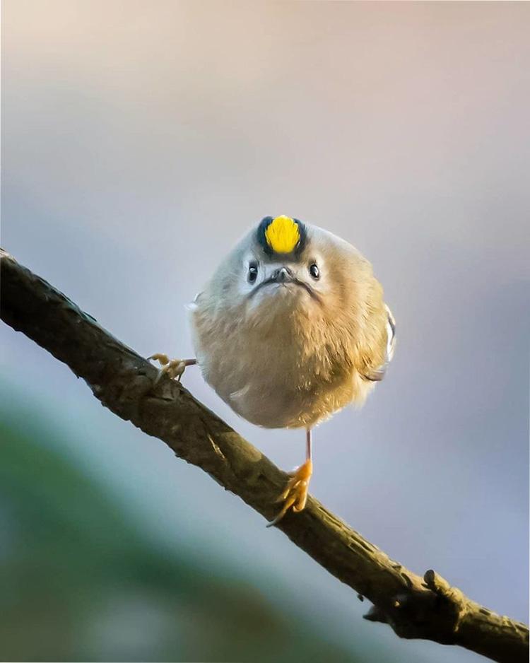 Прикольные птицы видео