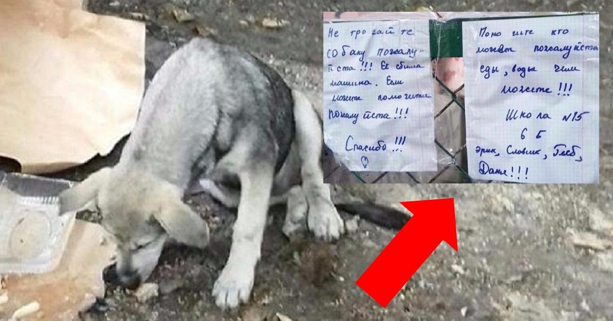 «Помогите, кто может, пожалуйста!» Шестиклассники спасли сбитую собаку, и оставили трогательные записки!
