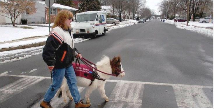 Во Франции и Бельгии появились пони-поводыри для слабовидящих людей
