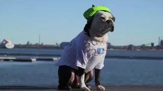 Смешные наряды для собак