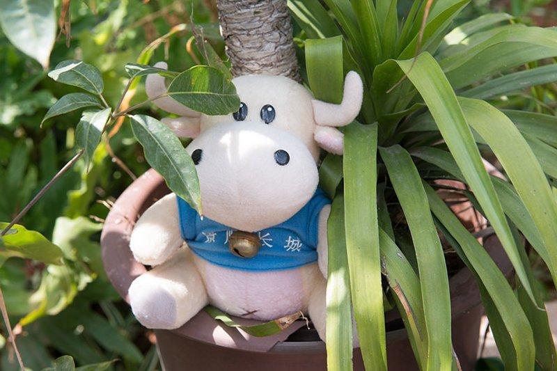 В китайском доме, где в месяц на семью тратят $10098, любимая игрушка — мягкая игрушка в мире, дети, игрушка, люди, страны