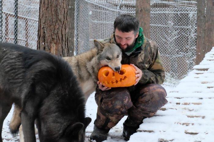 Приручивший волков, набирает популярность в «Инстаграме» красивые фотографии,приколы,смешные картинки,фото приколы,юмор