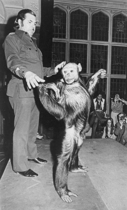 Шимпанзе Оливия.