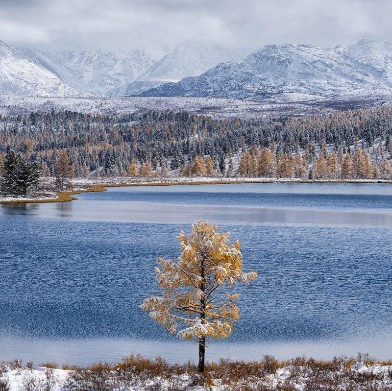 Озеро Киделю, Алтай горы, леса, природа, природа России, российская природа, россия