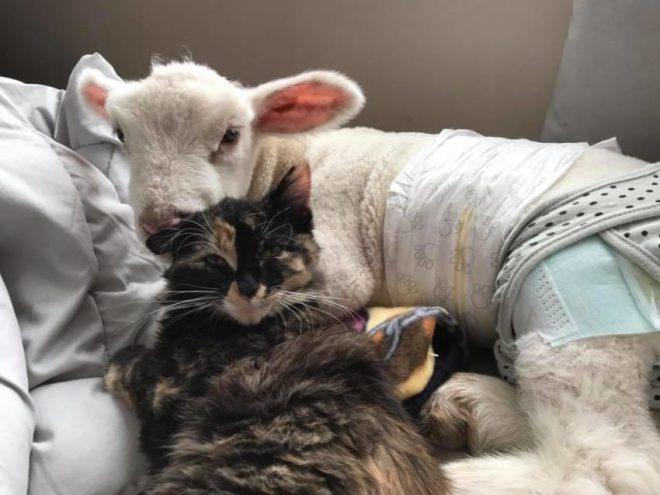 «И даже ест сено!»: благодаря новому другу, кошка делает необычные вещи