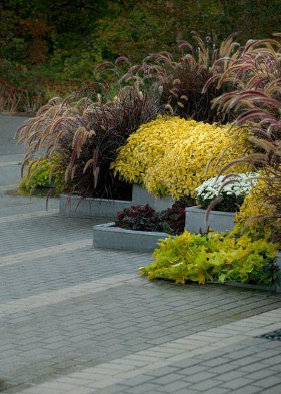 Модернизм Сад by Daryl Toby - AguaFina Gardens International