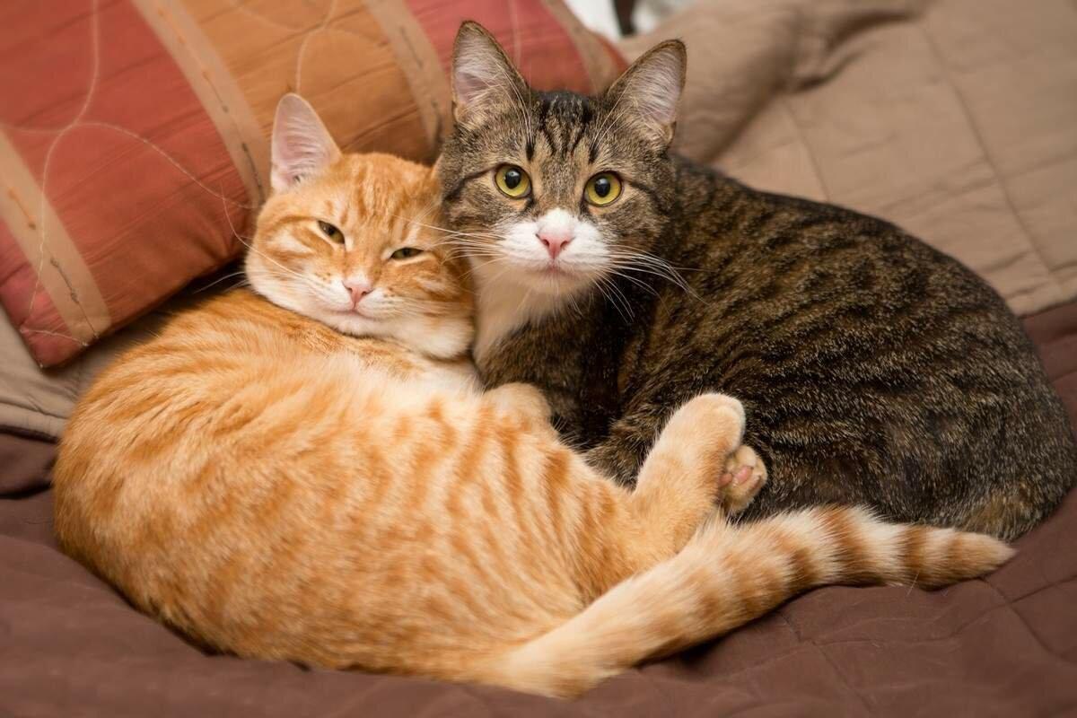 Почему лучше брать двух кошек сразу