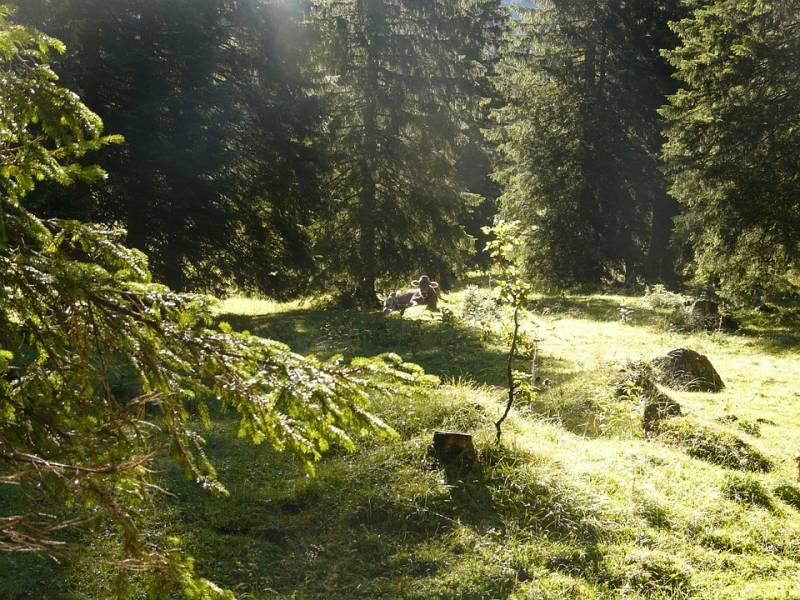 Сокровища русского леса