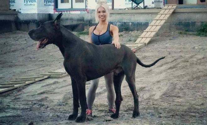 Собака высотой два метра вышла на улицы города: люди приняли ее за коня