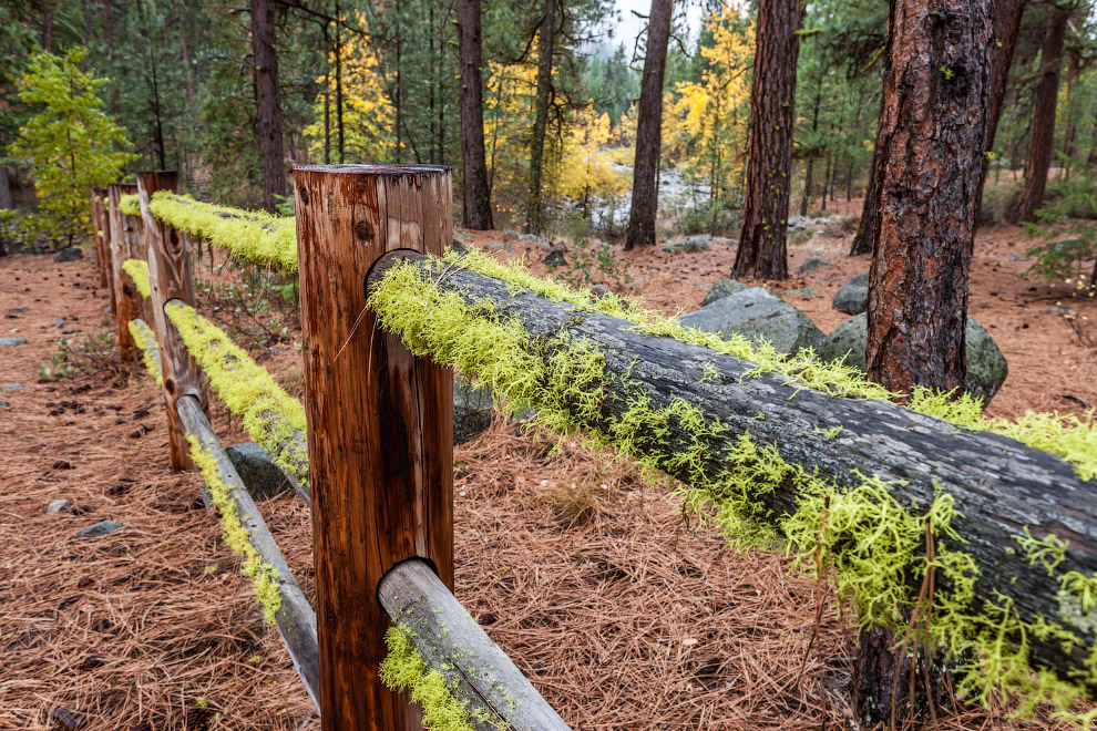 Лес возле Уинтропа, штат Вашингтон
