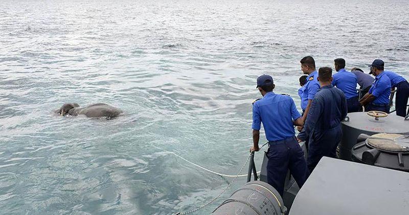 Военнослужащие ВМС Шри-Ланки спасли унесенного в море слона