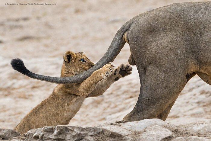 Дико забавные! Объявлены победители конкурса смешных фотографий природы