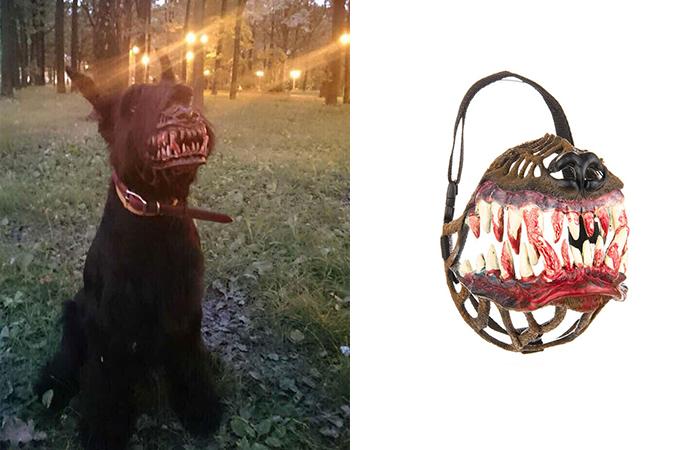 Из самого доброго пса вкровожадного монстра!