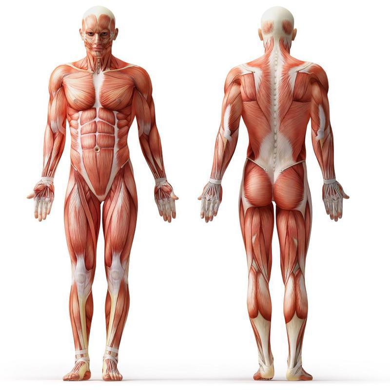 Лучшие упражнения для здоров…