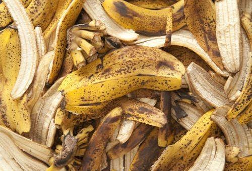 Вот как сделать удобрение для растений из банановой кожуры