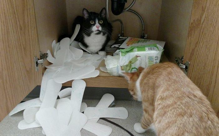 Понять и простить, хозяйка животные, кот, коты, кошки, приколы с животными, смешно, фото, юмор
