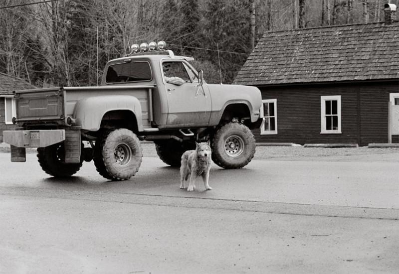 Таша (18 лет) собаки, фото собак, фотографии животных