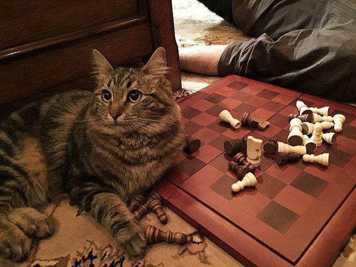 С ней - никаких шансов на победу животные, кот, коты, кошки, приколы с животными, смешно, фото, юмор