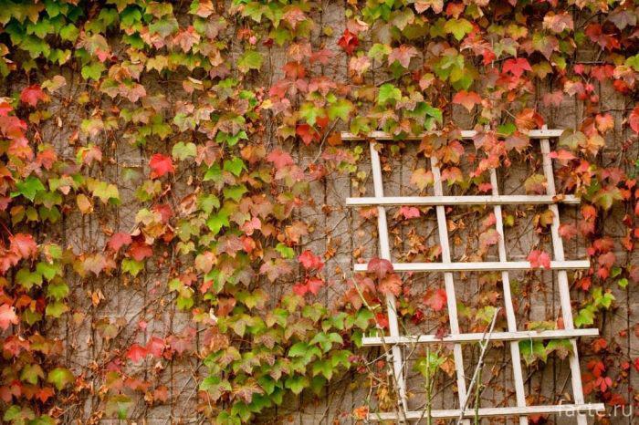 Озеленение фасада