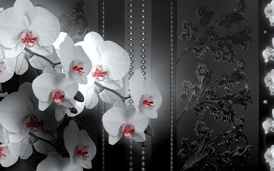 картинка белой орхидеи на сером фоне если песню
