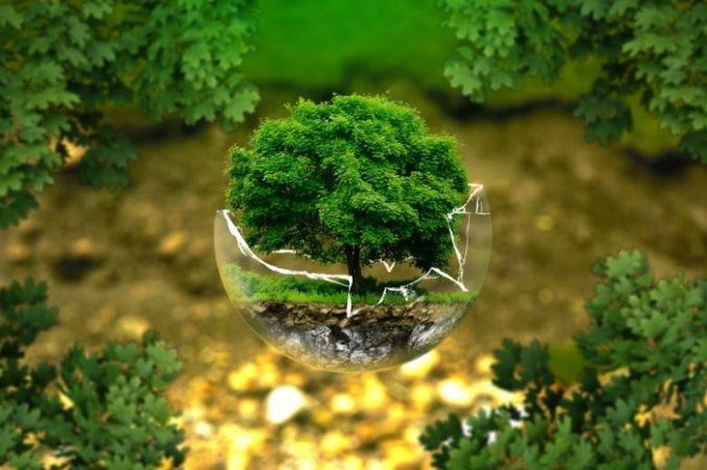 Как деревья общаются друг сдругом? деревья,наука,природа,странное
