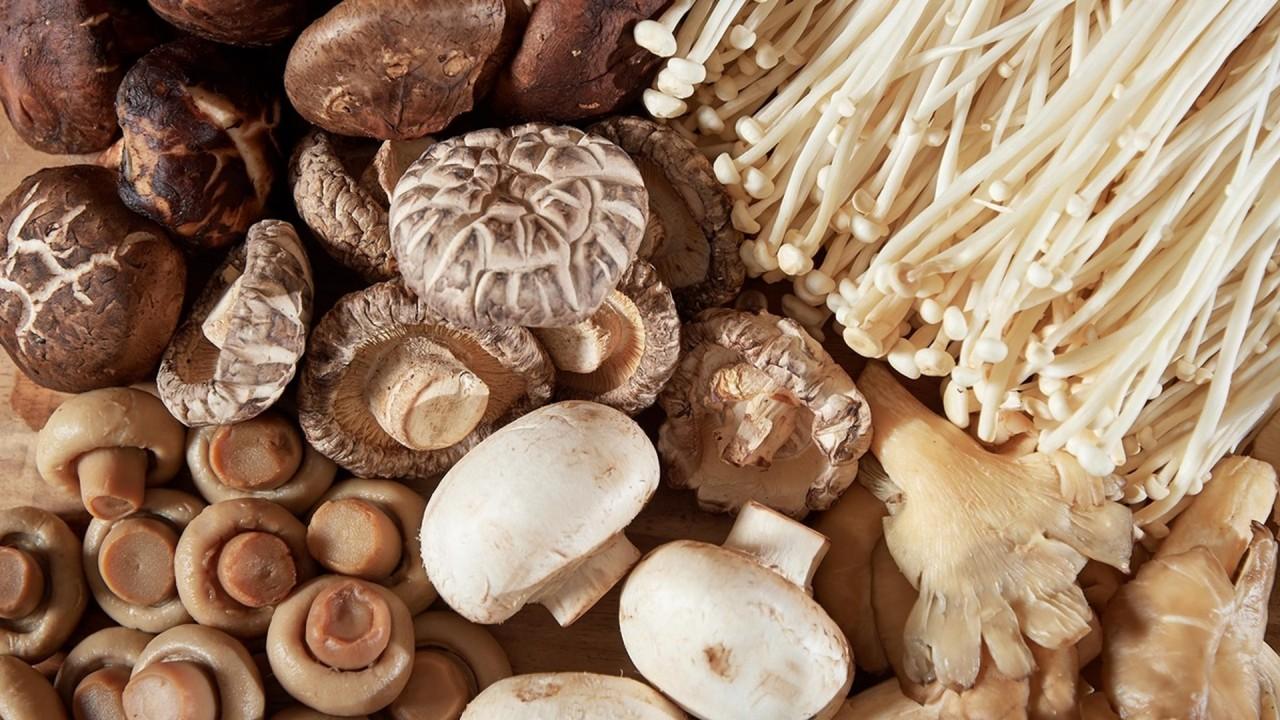 Учёные рассказали, как грибы защищают мозг пожилых людей от возрастных нарушений медицина