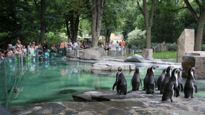 Главный зоопарк в Чешской республике и один из самых крупных на территории Европы может похвастаться не только разнообразием животных, но и собственной аллеей звезд.