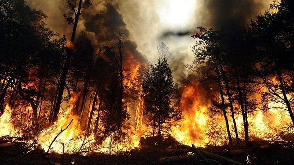 Холодный душ для Латвии: НАТО и Евросоюз отказали в помощи тушения пожаров