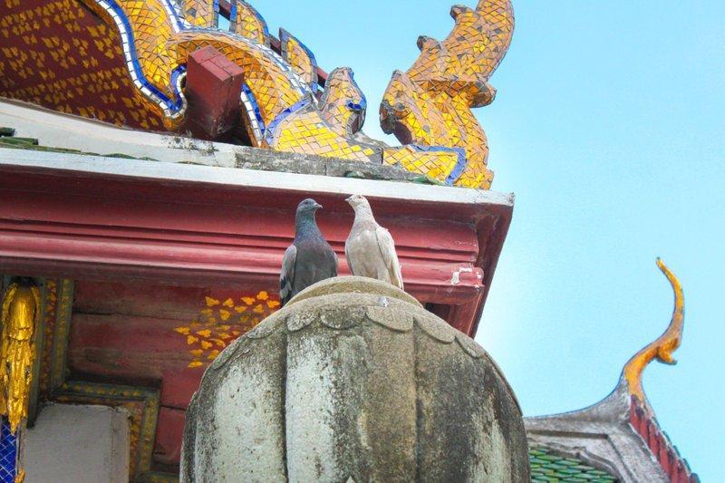 Любишь кормить голубей? Отправляйся в тюрьму! ynews, Тюрьма, голуби, наказание, новости, таиланд