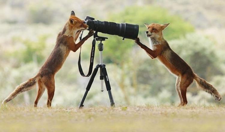 20 веселых фото дикой природы от австрийского фотографа Джулиана Рада Природа