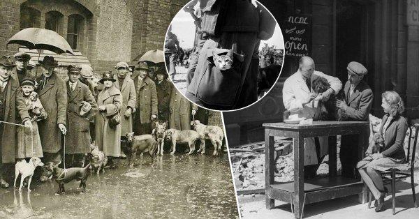 Гуманная смерть: почему в Британии перед войной усыпили более 750 тысяч домашних питомцев?
