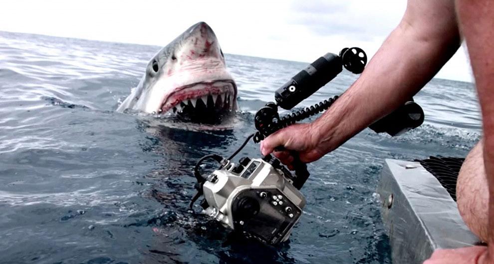 Работа фотографа в тесном контакте с животным миром