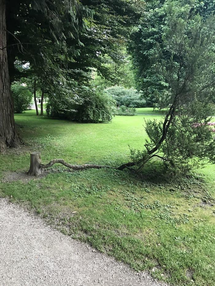 This Tree That Refuses To Die