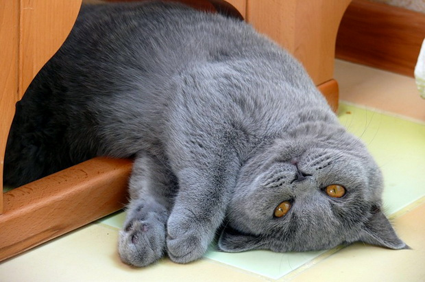 Любимый аттракцион для кота Семёна