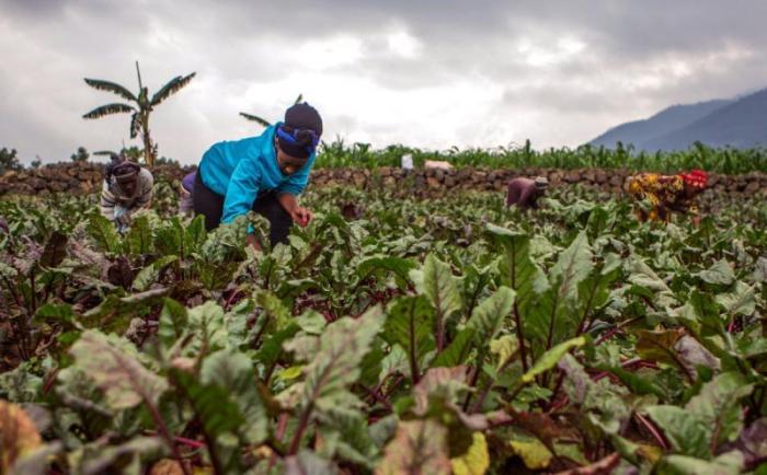 Африканская фермерша додумалась делать вино из свеклы