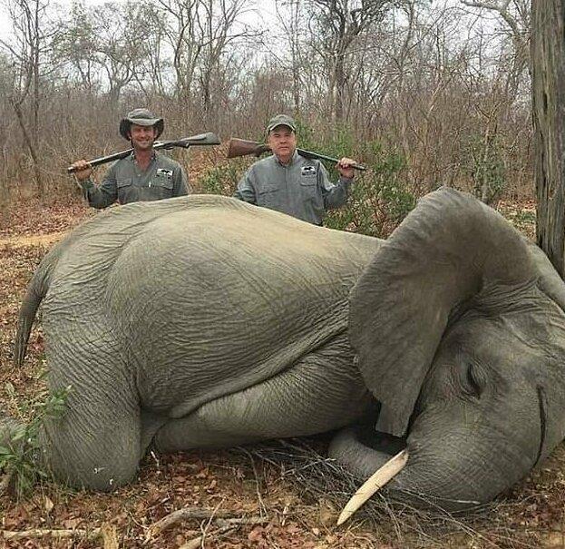 Удачная охота на слонят может стоить коммерсанту бизнеса