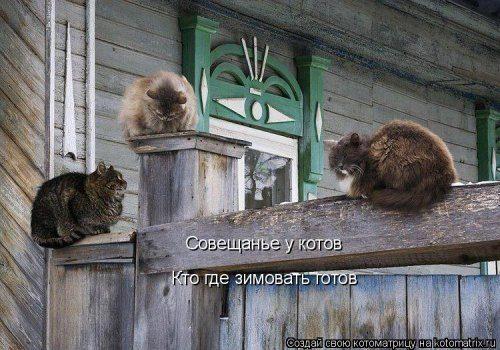 Самые смешные котоматрицы за прошедшую неделю