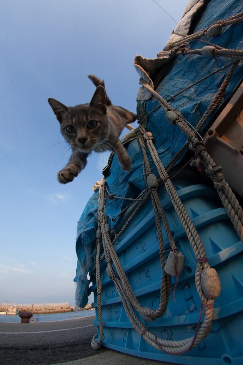 Тасиро, или Остров Кошек коты