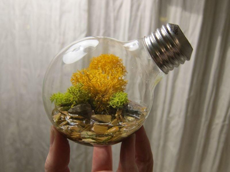 3. Террариумы из лампочек декор, интересно, красиво, своими руками, старая лампочка, фото