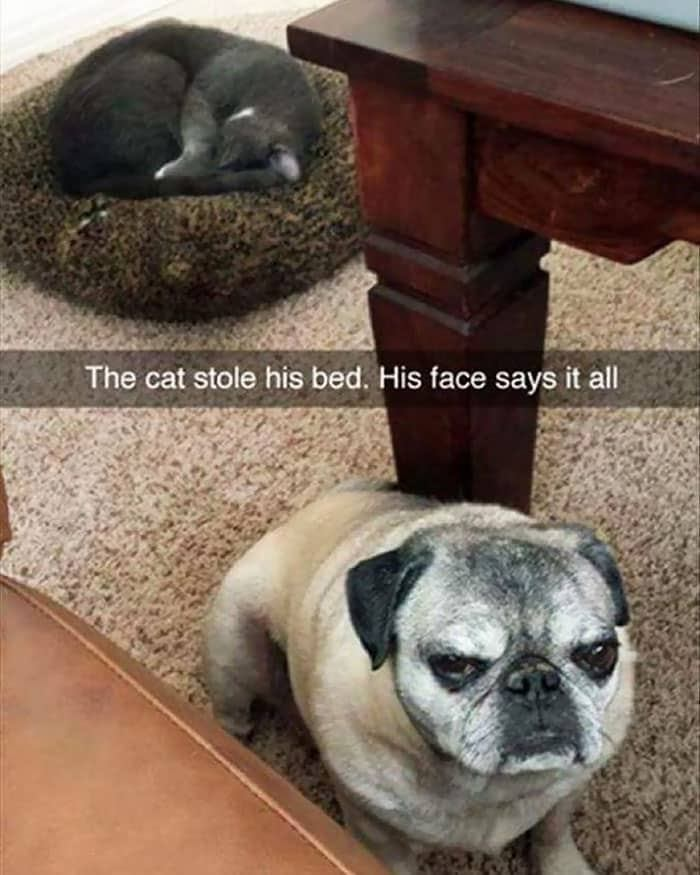 10+ кошек, которые отжали по…