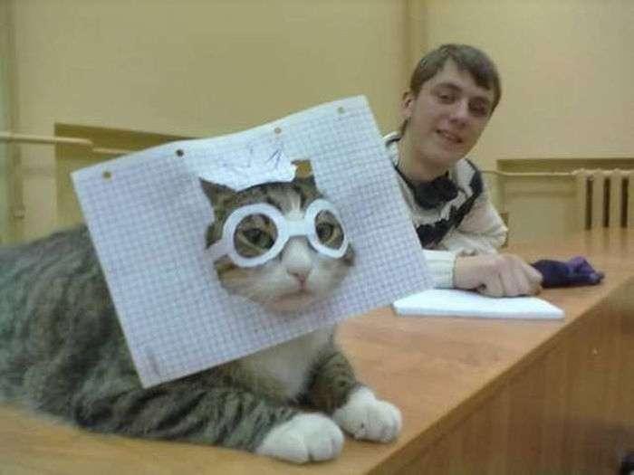 Открытку, кот дебил прикольные картинки