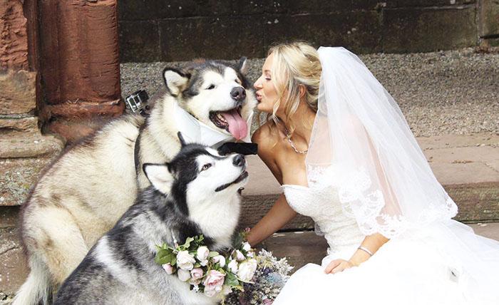 Пара сделала двух маламутов свидетелями на свадьбе, и они справились лучше всех