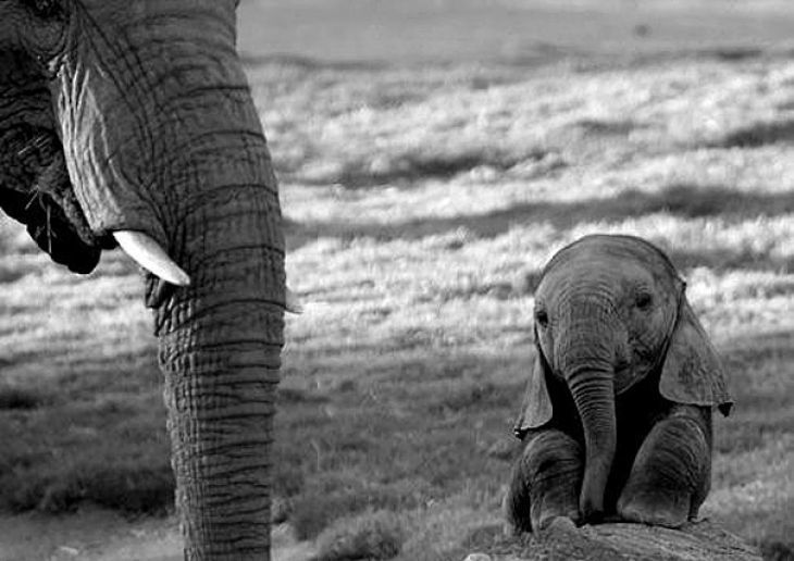Доза умиления обеспечена: 12 самых очаровательных детенышей животных