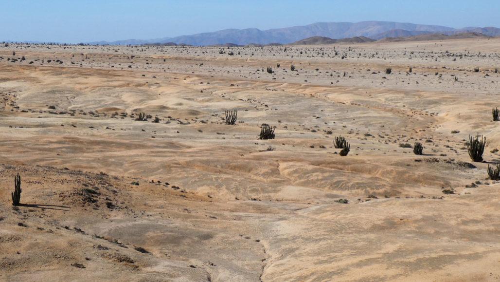 «Экстремальные» сообщества организмов придают пятнистый оттенок пустыне Атакама в национальном парке Пан-де-Асукар