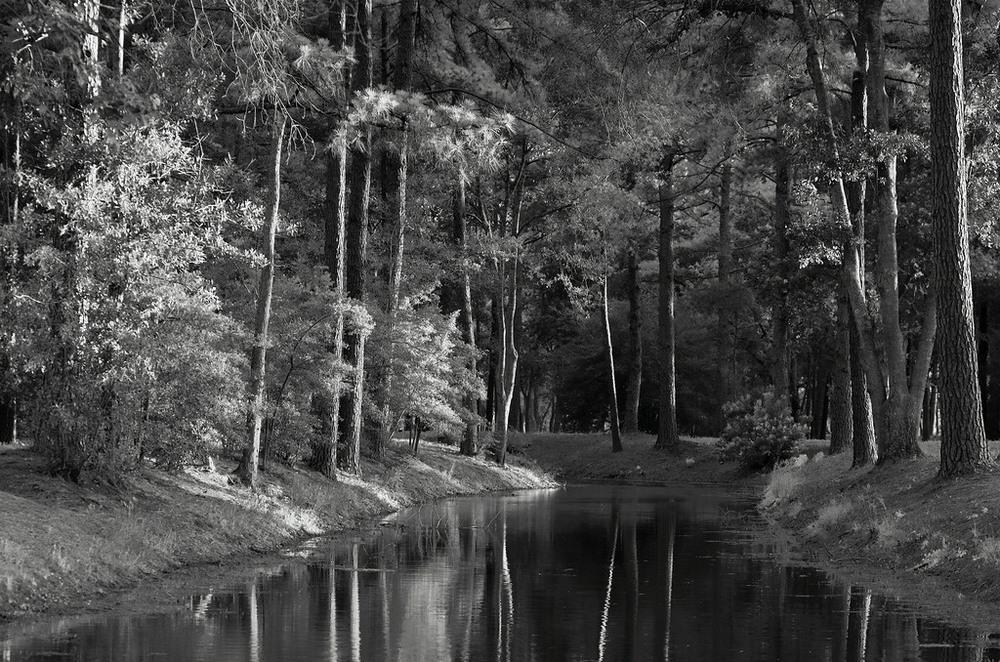 Черно-белое волшебство  Энрике Пелаэс (США)