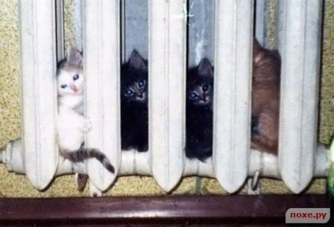 Кошки-это наше все! (фотоподборка)