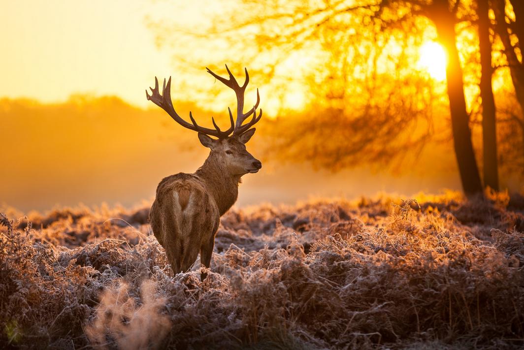 Удивительные снимки, сделанные на рассвете