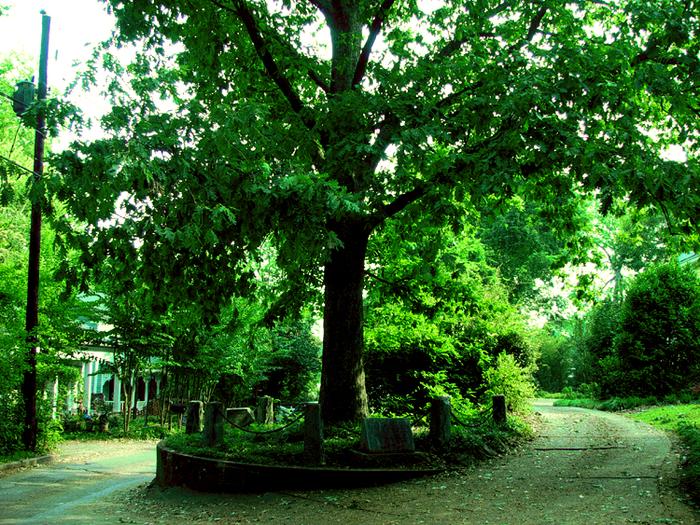 Дерево, которое принадлежит самому себе